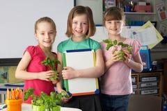 Meisjes die over installaties in schoolklasse leren stock afbeeldingen