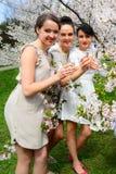 Meisjes met champagne het vieren in de tuin van sakura Stock Foto's