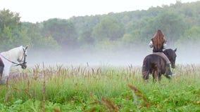 Meisjes op horseback die aan de mist zich vroeg in de ochtend bewegen stock footage