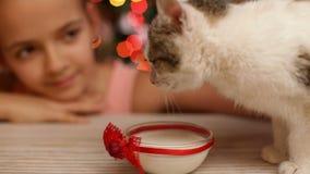 Meisjes voedend katje met melk in Kerstmistijd stock video
