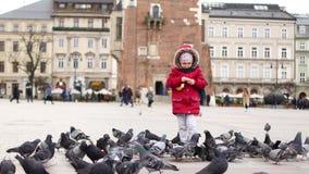 Meisjes voedende duiven in het centrale vierkant van Krakau, Polen stock video