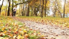 Meisjesgang ongeveer met brakpuppy in herfstpark LANGZAME MOTIE stock video