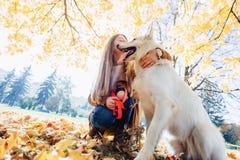 meisjesgangen bij de herfstpark met jonge witte Zwitserse herdershond stock afbeeldingen