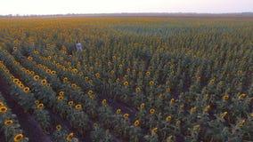 Meisjesgangen op zonnebloemengebied stock video