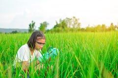 Meisjeshanden die vergrootglas in padieveld houden royalty-vrije stock afbeelding