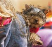 Meisjeskind met een puppy Yorkshire Terrier Stock Foto