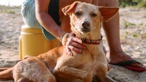 Meisjesvrijwilliger in het kinderdagverblijf voor honden die leuke volwassen hond strijken royalty-vrije stock afbeelding