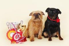 Meister zwei Hund-Brüssels Griffon sitzen Lizenzfreies Stockbild