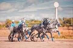 Meisterschaft der Russland-Russe-Troika Stockfotografie