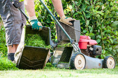 Meja för gräsmatta Royaltyfri Foto