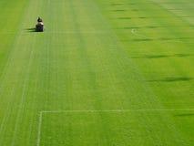 Meja gräs Arkivfoto