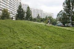 Meja gräset Fotografering för Bildbyråer