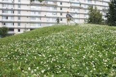 Meja gräset Royaltyfri Bild