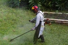Meja i Costa Rica royaltyfri fotografi