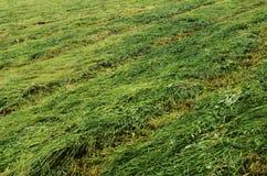 Mejad gräsplan sätter in bakgrund Royaltyfri Bild