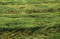 Mejad gräsplan sätter in bakgrund Royaltyfria Foton