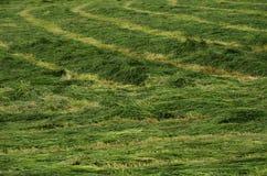 Mejad gräsplan sätter in bakgrund Arkivbild