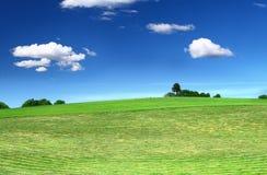 mejad lawn Royaltyfria Bilder
