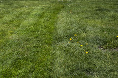 mejad lawn royaltyfri fotografi