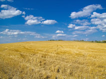 Mejat fält, blå himmel Royaltyfria Foton