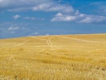 Mejat fält, blå himmel Fotografering för Bildbyråer