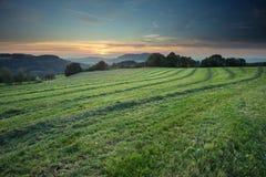 Mejat fält i solnedgång Fotografering för Bildbyråer