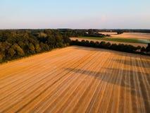 Mejat f?lt i Tyskland med trevlig bl? himmel och tr?d i bakgrund royaltyfri bild