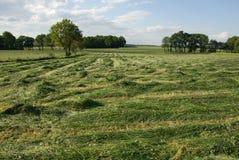 mejat gräs Royaltyfri Fotografi