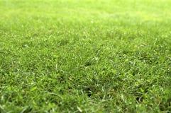 mejat gräs Royaltyfria Bilder