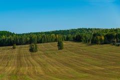 Mejat gräs i en remsa på ett löst fält Royaltyfri Bild