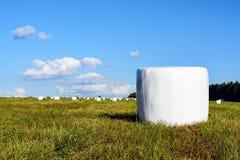 Mejat hö i det förpackande fältet Arkivbild
