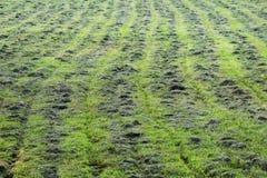 mejat mekaniskt gräset i röjningen, inkörda rader för parallella spår arkivbild