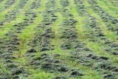 mejat mekaniskt gräset i röjningen, inkörda rader för parallella spår fotografering för bildbyråer
