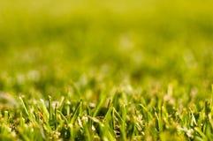 mejat nytt gräs fotografering för bildbyråer