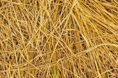 Mejat torkat gräs - bakgrundsbild arkivfoto