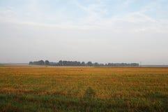 Mejat vetefält av guling-gräsplan Royaltyfri Fotografi