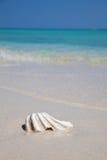 Mejillón en una playa exótica Fotos de archivo libres de regalías