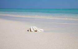 Mejillón en una playa exótica Foto de archivo libre de regalías