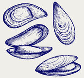 Mejillón labiado cocinado libre illustration