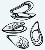 Mejillón labiado cocinado Imagen de archivo libre de regalías