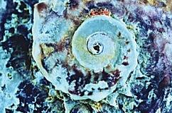 Mejillones abstractos Fotografía de archivo