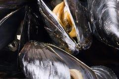 Mejillones bio para el restaurante imagen de archivo libre de regalías