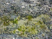 Mejillones en la playa imagenes de archivo
