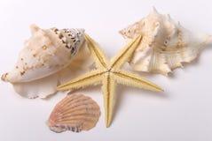 Mejillones y estrellas de mar Fotos de archivo