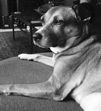 Mejor amigo Foto de archivo