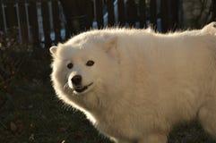 Mejor amigo del hombre del perro imagenes de archivo