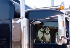 Mejores amigos del hombre de los perros Fotografía de archivo libre de regalías