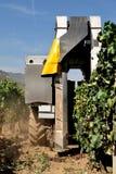 Mekanisk druvaskörd i en vingård Royaltyfri Fotografi