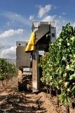 Mekanisk druvaskörd i en vingård Royaltyfri Foto