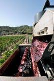 Mekanisk druvaskörd i en vingård Royaltyfria Bilder